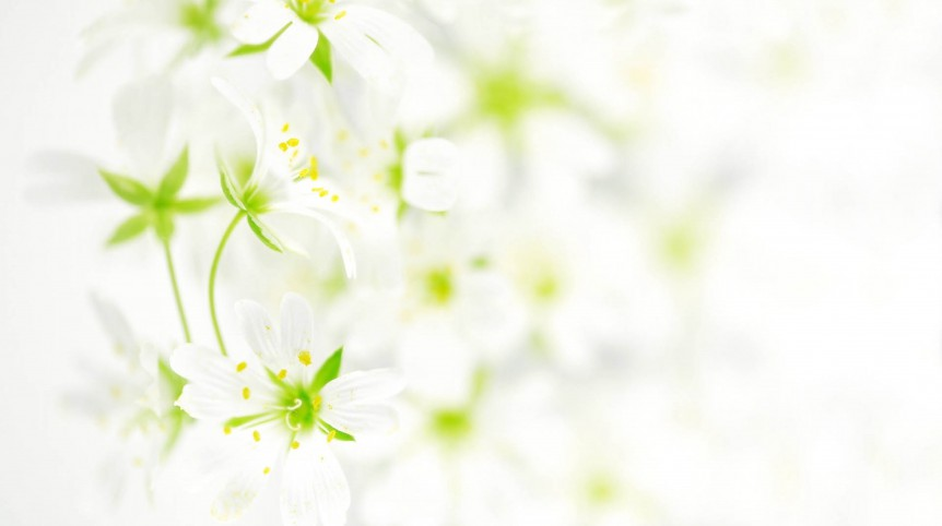flowers_white_background_petals_89170_3840x2160